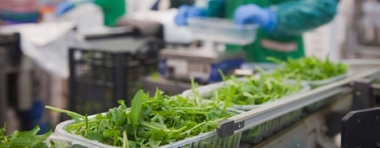 Rucola IGP al Fruit Logistica di Berlino, pronta a scalare la Top Ten del Made in Italy