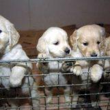 Inserimento gratuito microchip per cani e gatti: parte la campagna