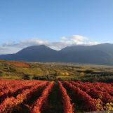 Città europea del vino, 120 eventi in programma: il 25 marzo l'incontro a Matera