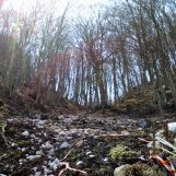 A Monteforte aree boschive trasformate senza autorizzazione: denunciate due persone