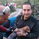 FOTO/ Cucciolo di Labrador intrappolato in un tubo: salvato dai Vigili del Fuoco