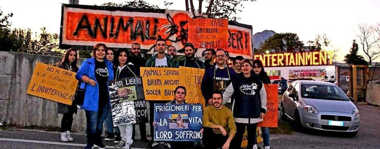"""Il circo ad Avellino scatena le proteste degli animalisti: """"Attendamento illegale, chiediamo l'intervento urgente del Prefetto"""""""