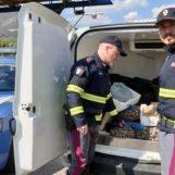 Sequestrati 4 quintali di frutti di mare, la Polstrada intercetta un furgone-frigo sull'A16