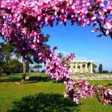 Pasquetta tra i templi di Paestum: area archeologica e museo aperti regolarmente