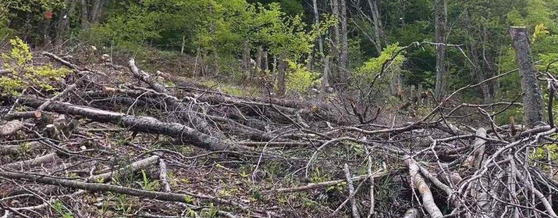 Trasformazione illecita di un bosco in area protetta: scattano denuncia e sequestro