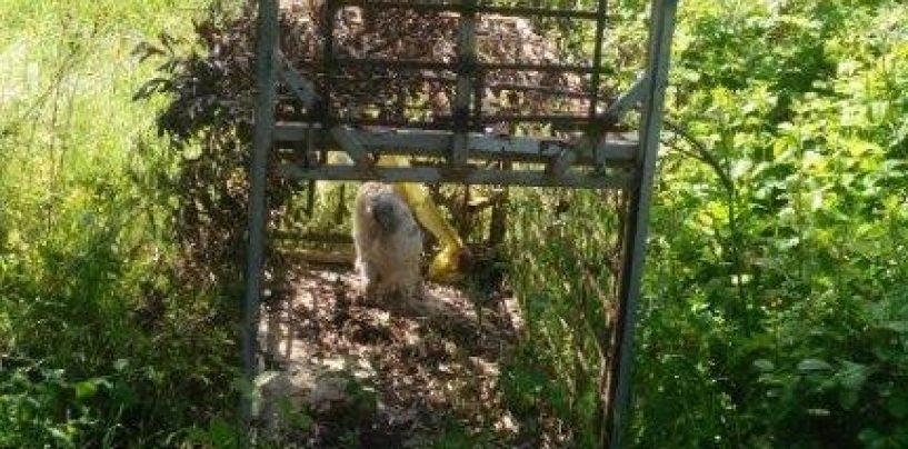 Trovate carcasse di animali usati come esche: scattano le indagini