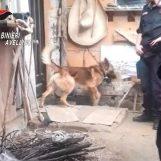 Droga nella Playstation: il pastore tedesco Tex in azione a Lioni