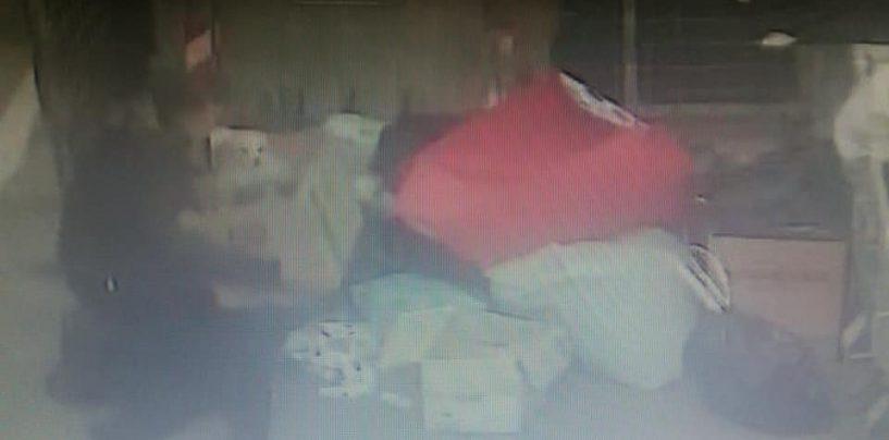 Abbandona dei cuccioli nell'immondizia: incastrata dalla videosorveglianza