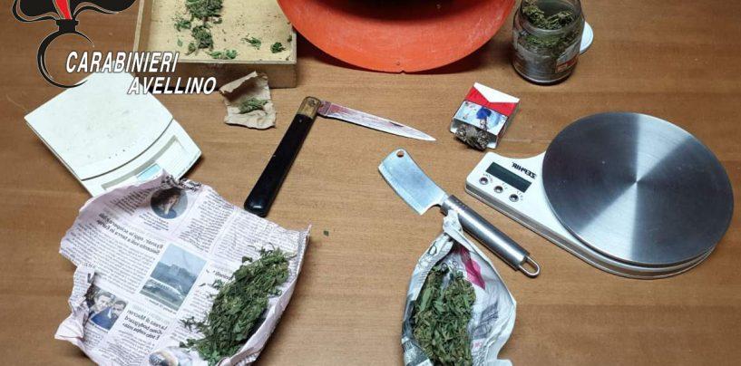 Semi di canapa e marijuana pronta per lo spaccio, il fiuto di Tex incastra un 52enne