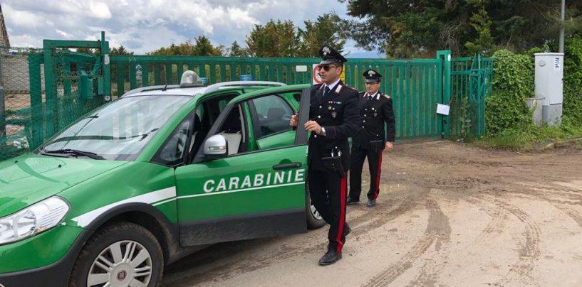 Combustione di residui vegetali: un'altra denuncia da parte dei carabinieri forestali