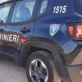 Rettile in cantina, i Carabinieri Forestali lo recuperano e lo liberano in montagna