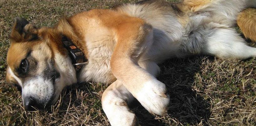 """""""Con Fido nel cuore"""" si batte per una casa rifugio per cani e gatti a Pietrastornina"""