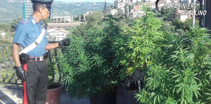 Coltiva marijuana sul balcone, nei guai un 50enne di Taurasi