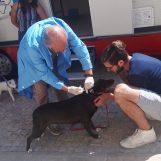 Microchip gratuiti ai cani di Santa Paolina, successo per la campagna promossa dal comune