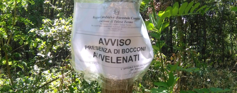 Esche avvelenate nel beneventano, i carabinieri forestali sequestrano il materiale