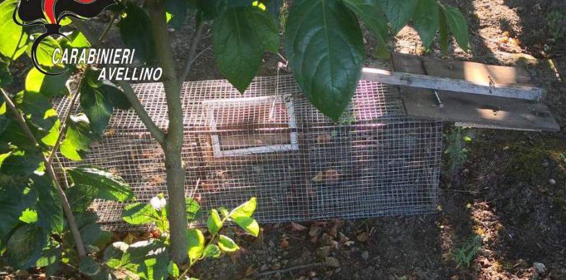 Bracconiere beccato dai Carabinieri: sequestrate reti e trappole