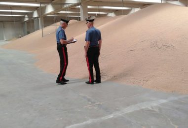 Piccioni e topi morti nel deposito: sequestrati 45000 quintali di grano