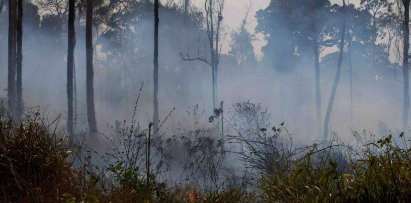 Incendi in Amazzonia, cosa rischia l'Irpinia?