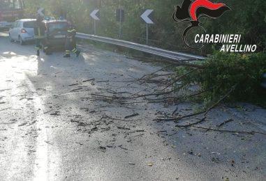 Panico sulla strada provinciale 400, rami si abbattono su un'auto in transito: solo tanta paura