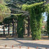 """Festa: """"Intitolato il Parco di Piazza Kennedy all'ex sindaco Di Nunno"""""""