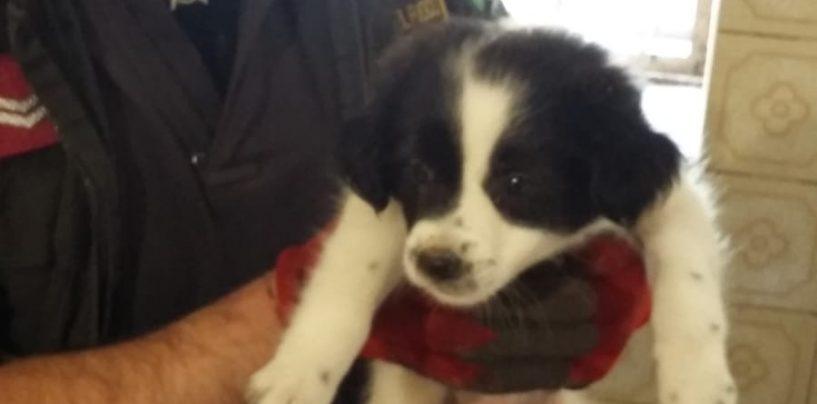 Cagnolino cade in una intercapedine di un'abitazione, lo salvano i vigili del Fuoco