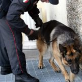 Blitz antidroga dei carabinieri in una scuola di Cervinara