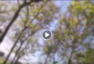 """VIDEO/ Ladri di noci """"beccati"""" mentre rubano, ecco le immagini"""