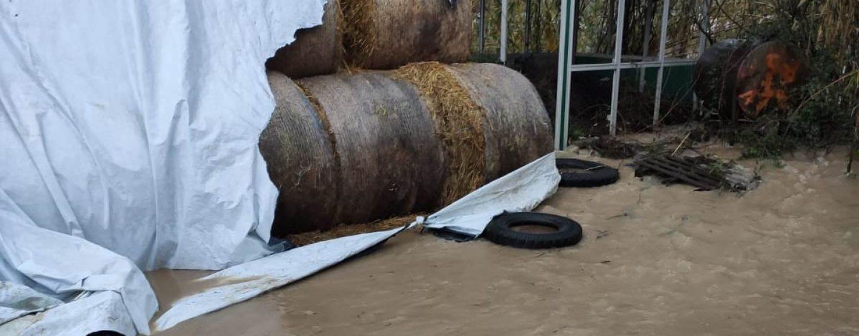 FOTO / Valle Caudina: il maltempo mette in ginocchio anche l'agricoltura