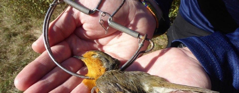 Scoperte trappole per fauna selvatica in Irpinia: una morte lenta e dolorosa per gli animali