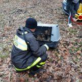 FOTO / Caposele: i vigili del Fuoco salvano due piccoli Lagotti