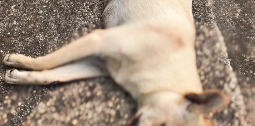Aiello del Sabato, 2 cani uccisi in una settimana: la denuncia di SOS Natura