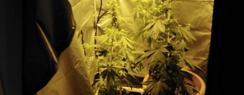 Coltiva piante di marijuana nel garage: arrestato 23enne