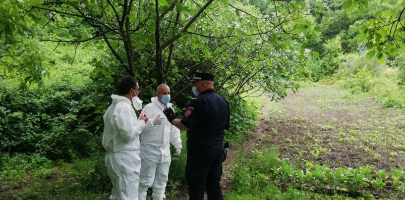 Pantera, la Regione Campania si mobilita per la cattura