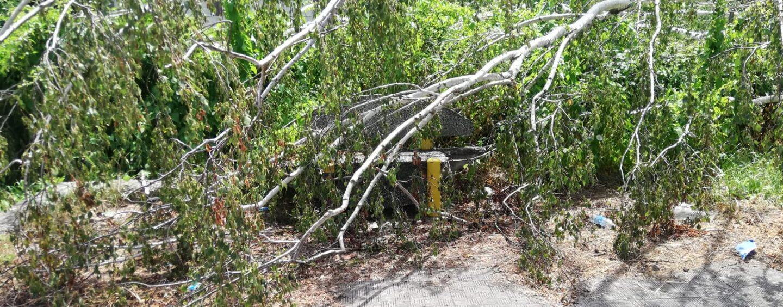 """Riapre il Manganelli, ma tante aree verdi sono abbandonate: un albero si """"sdraia"""" su una panchina in via Silvati"""
