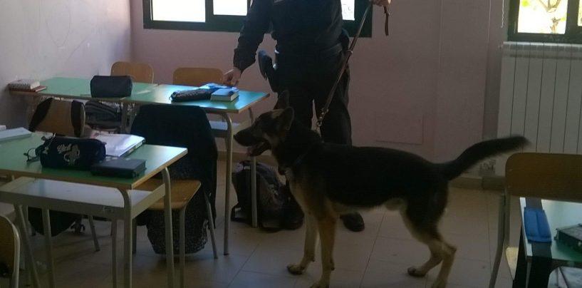 Droga nelle scuole, 17enne sorpreso con hashish dai Carabinieri
