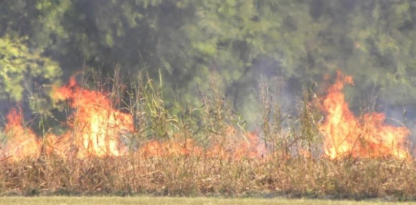 La combustione di residui vegetali non è reato, la nota di Daniela Nugnes