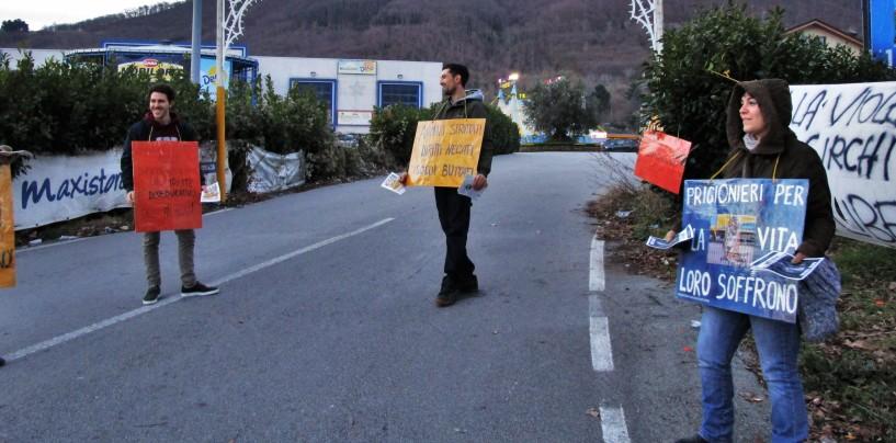 """""""Animali imprigionati e manifesti abusivi"""", attivisti irpini contro il Circo a Monteforte"""