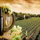 """Biodigestore, """"Città del vino"""" apre al confronto: """"Territorio da tutelare"""""""