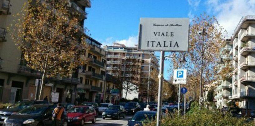 Venti nuovi platani in viale Italia, 1.250 alberi in tutta la città