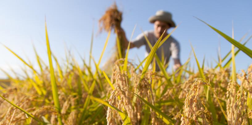 """Export agroalimentare, Coldiretti: """"Campania +3,6%, va male solo in Irpinia"""""""