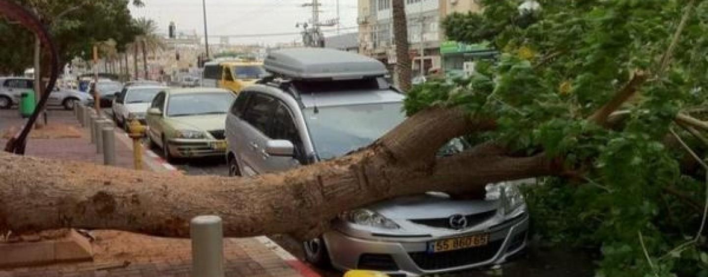 Un albero si infrange su un'auto in corsa: infermiere salvo per miracolo