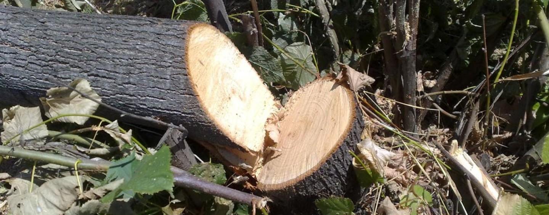 Travolto dall'albero che stava potando, paura a Contrada Bagnoli