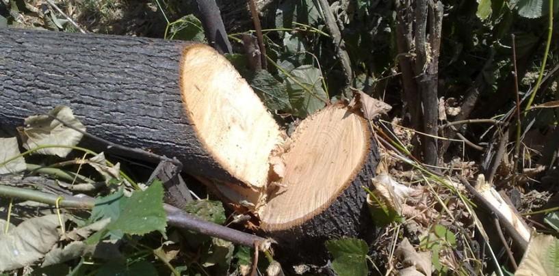 Travolto dalla caduta di un albero, è grave boscaiolo di Avella
