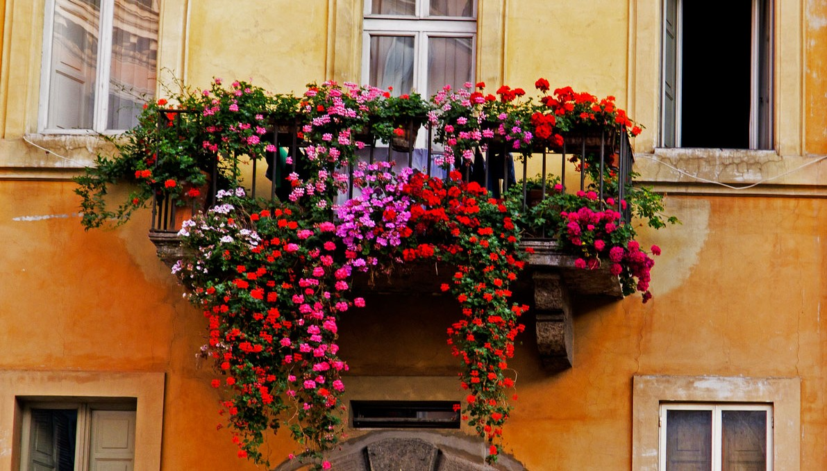 Balconi fioriti nel centro storico di avellino - Fiori da esterno primaverili ...