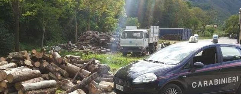 Area boschiva trasformata in castagneto: denunciato 55enne