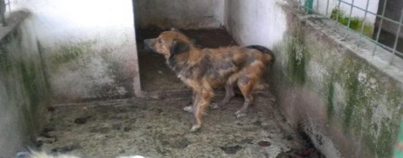 Scoperto nuovo canile lager, denunciato sedicente animalista