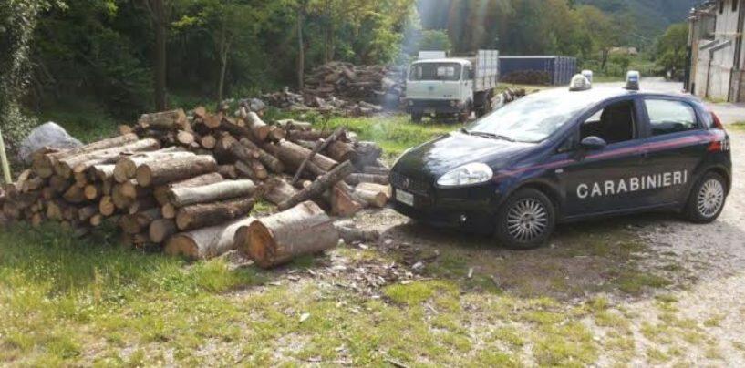 Ruba dieci quintali di legna da un fondo non di sua proprietà: scatta la denuncia