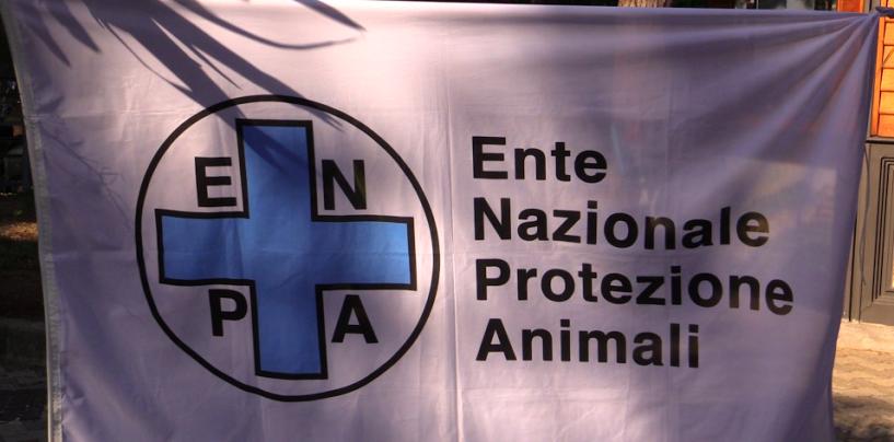 E.N.P.A. Regione Campania: non si ferma la campagna contro l'abbandono degli animali