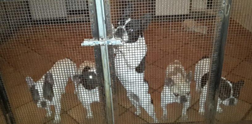 """La denuncia di EITAL: """"Animali restituiti ad un contrabbandiere di cuccioli, Giustizia KO"""""""