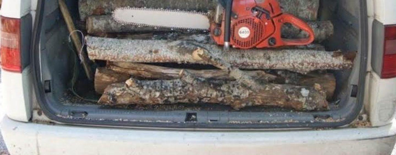 Danneggiamento boschivo e furto di legna: in tre nei guai